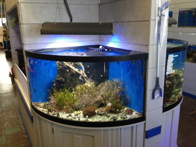 Fish aquariums near me parrot cichlids aqueon 65 gallon for Fish for sale near me