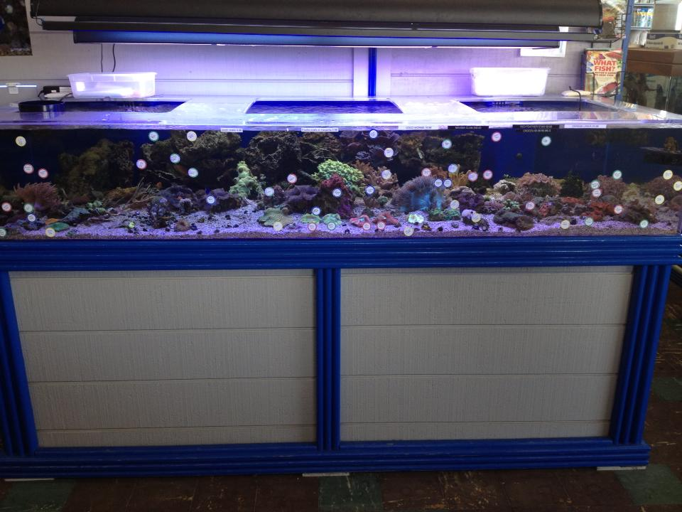 Stingray Bay Pet Supplies Tropical Fish And Pet Supplies
